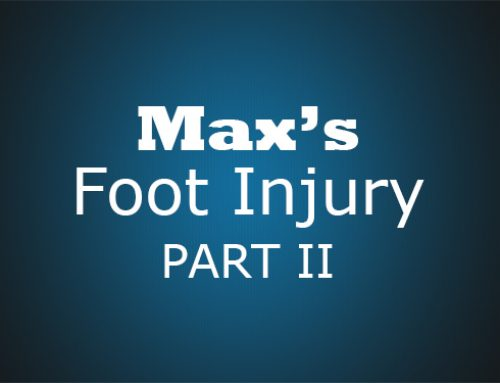 Max's Foot Injury Part II
